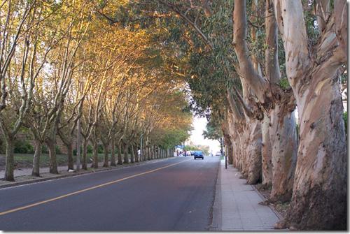Calle Alem
